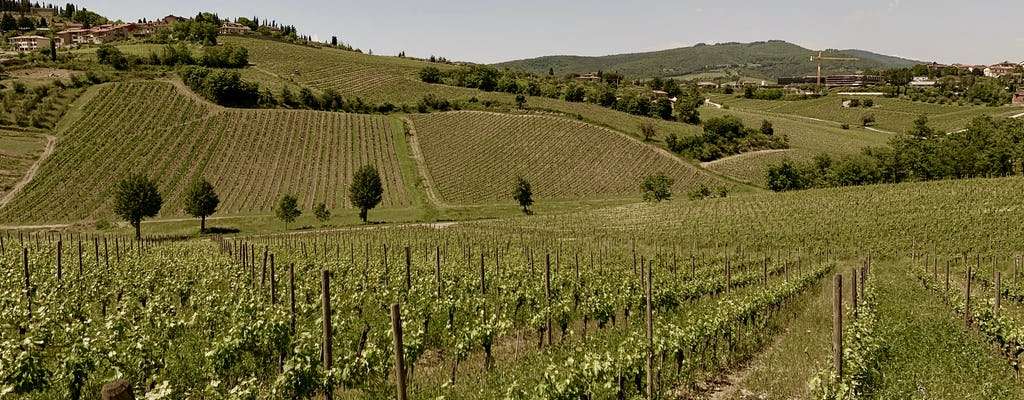 Private wine experience in Chianti and Radda in Chianti