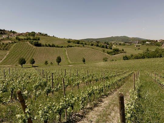 Experiência privada de vinho em Chianti e Radda in Chianti