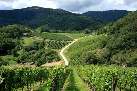 Alsace Villages & Wines Private Half Day Trip From Strasbourg