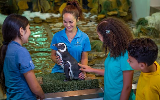 SeaWorld® Orlando Penguin Encounter