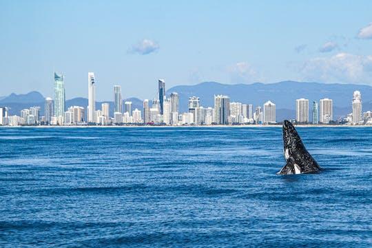 Crociera per l'avvistamento delle balene della Gold Coast con partenza da Surfers Paradise