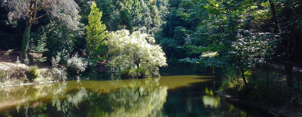 Esperienza di camminata nella foresta di Bussaco da Coimbra