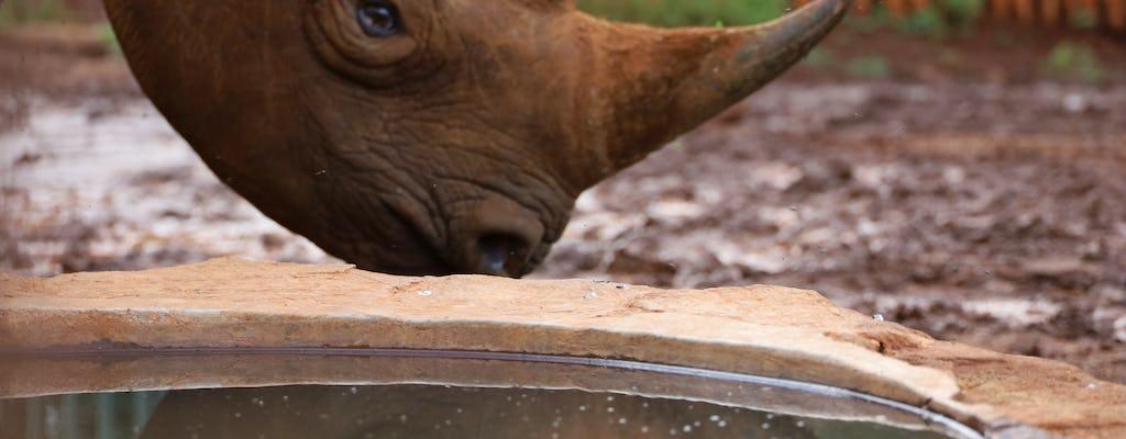 Excursão de um dia inteiro pelo Sheldrick Wildlife Trust, Museu Karen Blixen e Giraffe Center