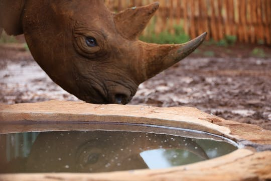 Full-day Sheldrick Wildlife Trust, Karen Blixen Museum, and Giraffe Center tour