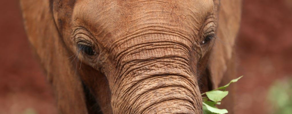 Half-day David Sheldrick Wildlife Trust tour