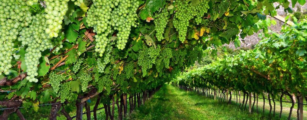 Tour privato con degustazione di vini Lugana