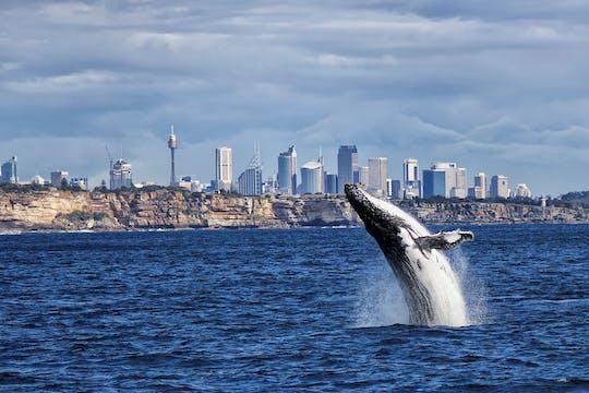 Crucero de avistamiento de ballenas en Sydney con desayuno o almuerzo