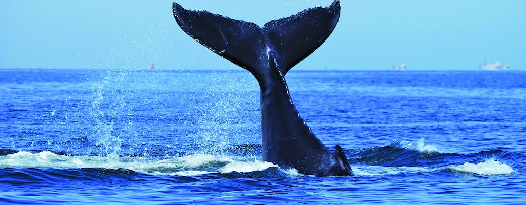 Sydney luxury whale-watching cruise with lunch