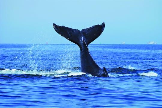 Luksusowy rejs po Sydney z obserwacją wielorybów z lunchem