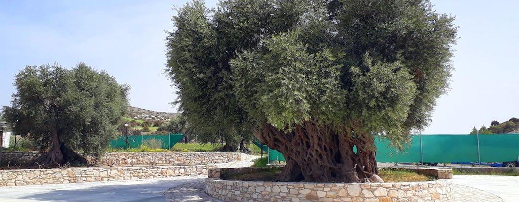 La ferme Golden Donkeys à Chypre - billet