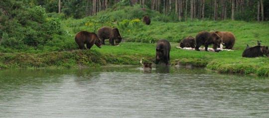 Bezoek aan een berenopvangcentrum vanuit Boedapest