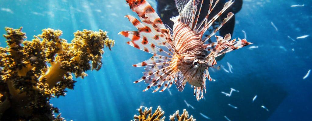 Binibeca Diving School Try Dive Ticket