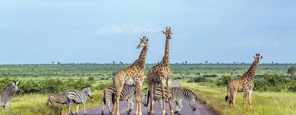 Kruger National Park full-day or half-day private safari