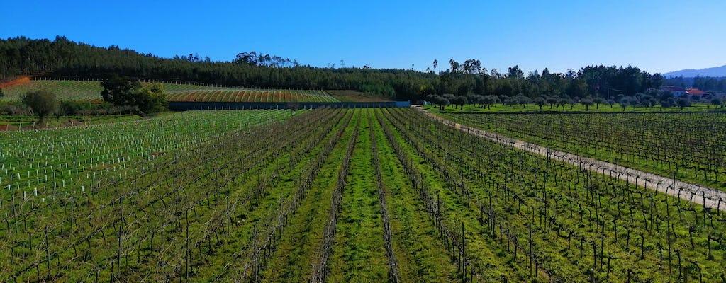 Experiência na rota dos vinhos da Bairrada com prova de vinhos e almoço