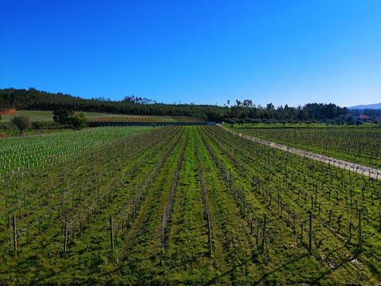 Doświadczenie na trasie winiarskiej Bairrada z degustacją wina i lunchem