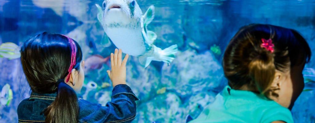 Bilet łączony SEA LIFE Aquarium i LEGOLAND® Discovery Center Tempe