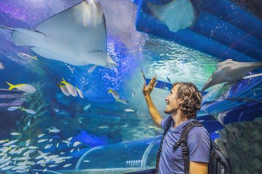 Bilet do akwarium i podwodnego zoo w centrum handlowym Dubai Mall