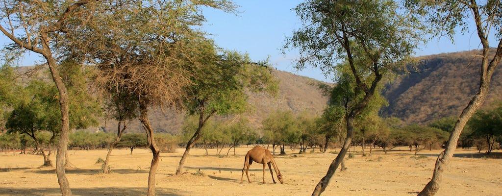 Jebel Samhan w Salalah całodniowa wycieczka