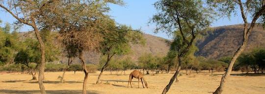 Excursion d'une journée à Jebel Samhan à Salalah