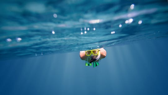 Tour di snorkeling di mezza giornata a Cape Town