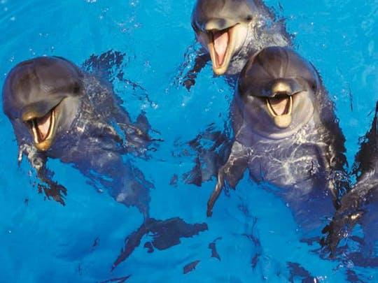 Delfin-Abenteuer