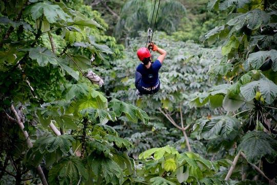 Forest Zipline Adventure Experience