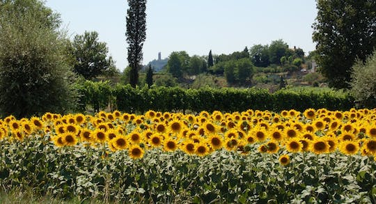 Self-guided bike tour from Lucca to Pisa