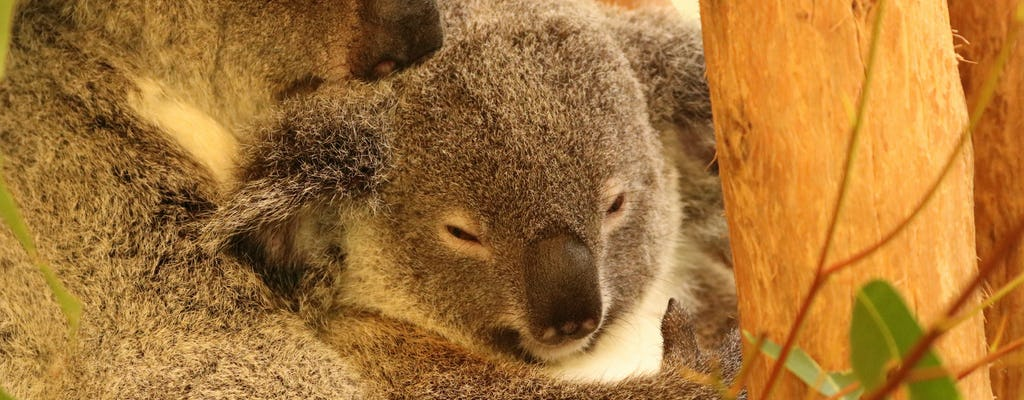 3 Australian wildlife park entry package