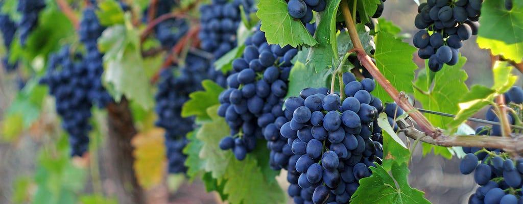 Sonoma en Napa Valley wijntour vanuit San Francisco