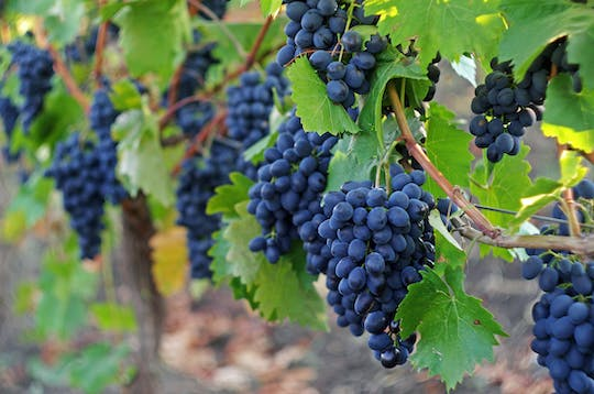 Sonoma and Napa Valley full-day wine tour from San Francisco