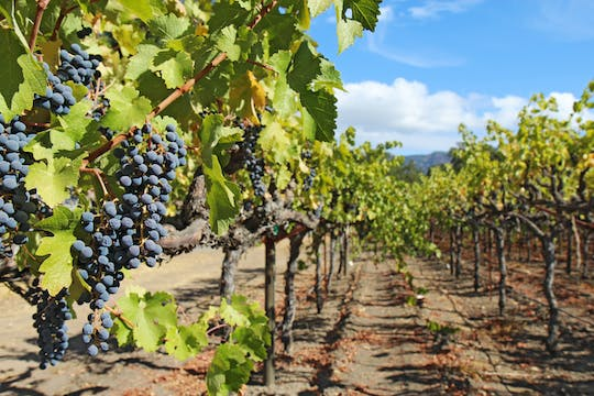 Sonoma Valley half-day wine tour from San Francisco