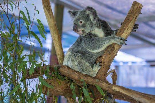 Boleto de entrada al parque Kuranda Koala Gardens Park
