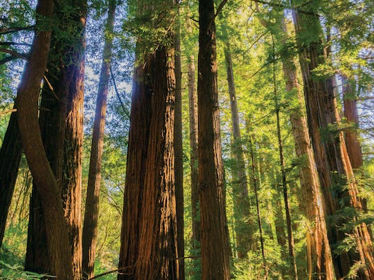 Muir Woods and Sausalito guided tour from San Francisco