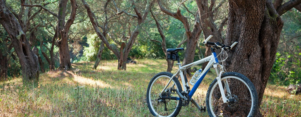 Picnic lunch, evo oil tasting and bike tour in Umbria