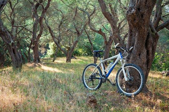 Lunch piknikowy, degustacja oleju evo i wycieczka rowerowa po Umbrii