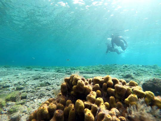 Expérience de plongée en apnée à Las Canteras