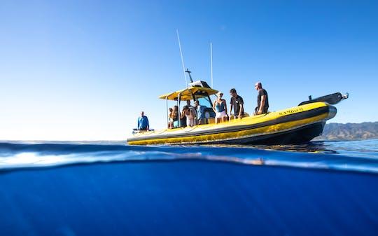 Passeio de mergulho com snorkel em North Shore Oahu