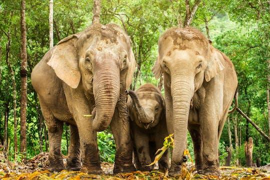 Expérience de l'Élephant Jungle Sanctuary de Chiang Mai