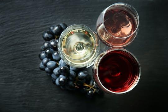 Comida guiada e degustação de vinhos em uma vinícola orgânica perto de Urbino