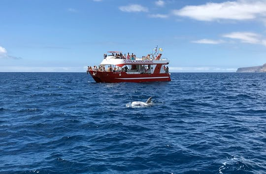 Dolphin Safari Cruise Gran Canaria
