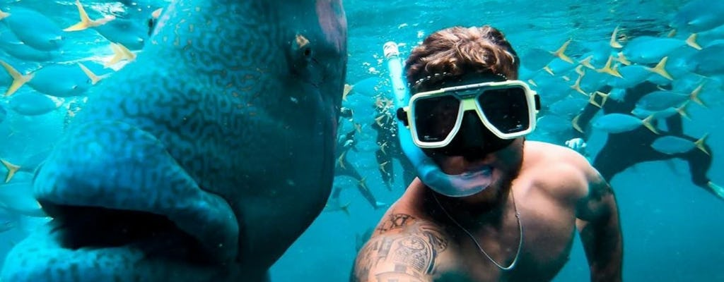 Cruzeiro Tongarra Whitsundays e mergulho com snorkel com almoço