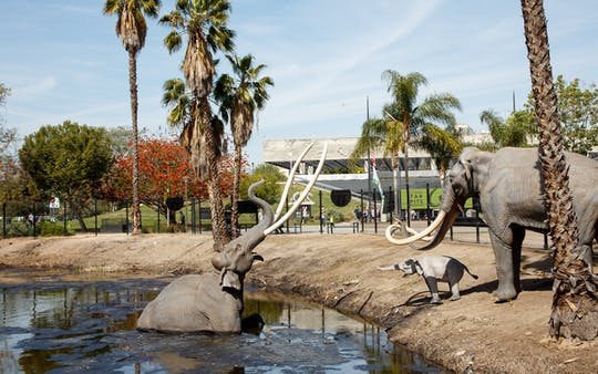 La Brea Tar Pits and Museum tickets