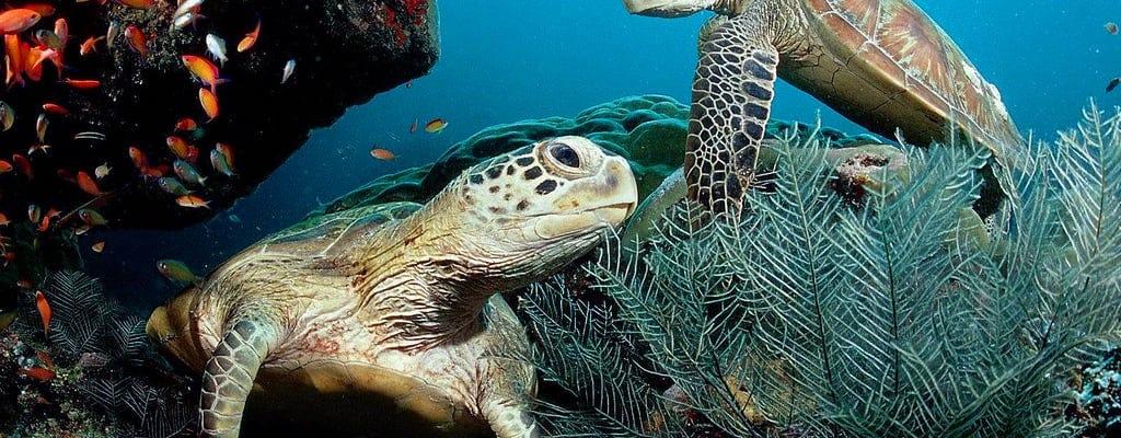 Cours PADI Scuba Diver