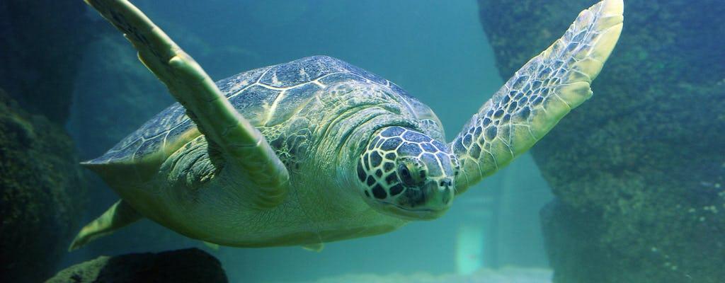 SEA LIFE Aquarium Grapevine Dallas tickets