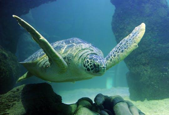 Billets SEA LIFE Aquarium Grapevine Dallas