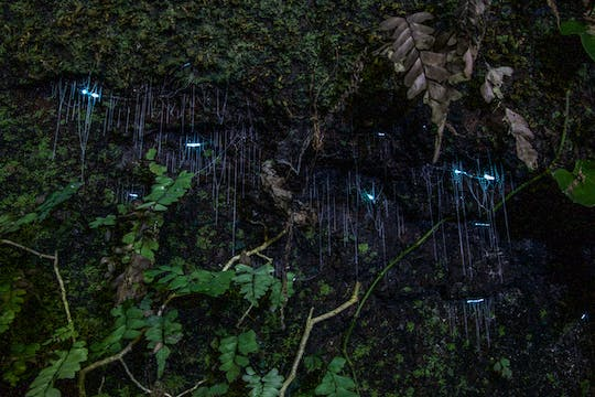 Evening rainforest and glow worm tour