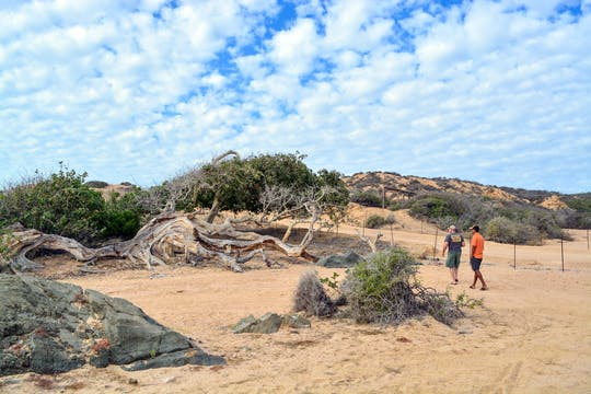 Cabo Pulmo Experience by 4x4