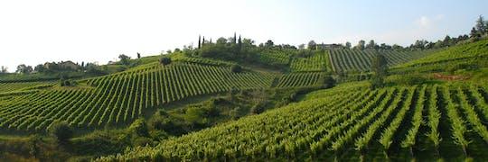 Cultura e paesaggi mozzafiato con degustazione di olio extravergine d'oliva