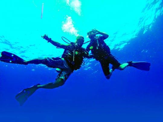 Delphinus Dives vanaf de kust op Lanzarote