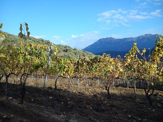 Degustazione del vino Cannonau ad Orgosolo